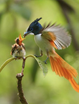 Luxury & Deluxe Birding Tours