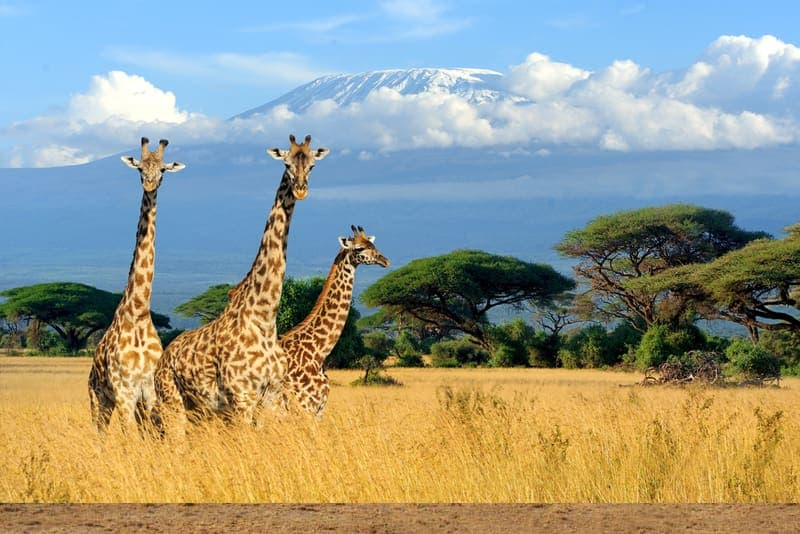 Kenya Luxury & Deluxe Tours