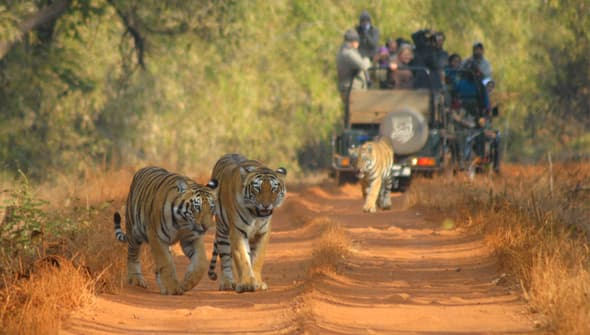 Tours & Travel, Wildlife Safaris, Tours to Africa, Tours to Kenya, Tours to Tanzania, Tours to Rwanda, Tours to India, Trips to Nepal, Gorilla Trekking, Birding Trips, Birding Tours, Tiger Safaris, Elephant Safaris, Exotic Journeys, Heritage Journeys, Incredible India Tours